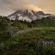 Beautiful Rainier Wildflower Meadows Poster