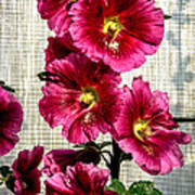 Beautiful Red Hollyhock Poster by Robert Bales