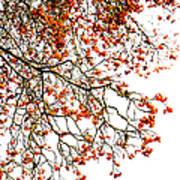 Beautiful Rowan 1 - Square Poster