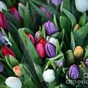 Beautiful Tulips Bouquet Poster