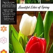 Beautiful Tulips Series 2 Poster
