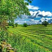 Summer View In Yorkshire Poster
