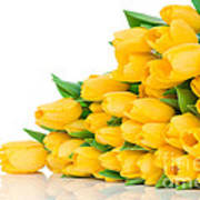 Beautiful Yellow Tulips Valentine Poster