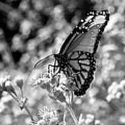 Butterfly Beauty In Nature Poster