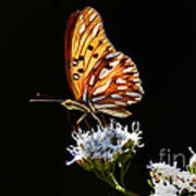 Beauty Of Nature Butterfly Brazil 2 Poster