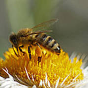 Bee At Work Poster