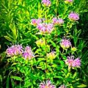 Bee Balm Of The Butterfly Gardens Of Wisconsin Poster