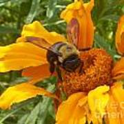 Bee Bold 2 Of 3 Poster