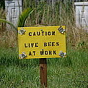 Bee Careful Poster