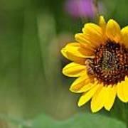 Bee Flower Poster