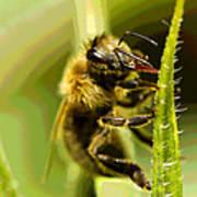 Bee Juice Poster
