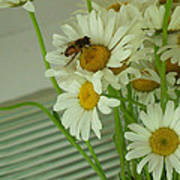 Honey Bee On Daisy Print Photo For Sale Poster