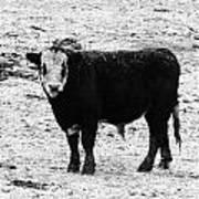 Beef Bandit Poster