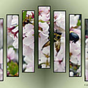 Bees And Blossoms Poster