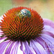 Beetle Bug Poster