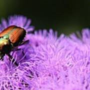 Beetle On A Flower Poster