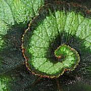 Begonia Leaf 2 Poster