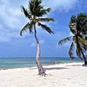 Beautiful Belize Palms Poster