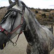 Bella On The Ranch Almanzora Mountain Spain  Poster
