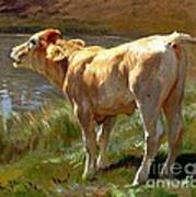 Bellowing Cow Poster