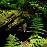 Beneath The Trees - Blue Ridge Mountains Poster