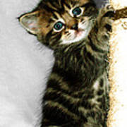 Benny The Kitten Playing Poster