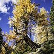 Bent Tree Poster