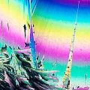 Benzoic Acid Microcrystals Coloful Abstract Art Poster