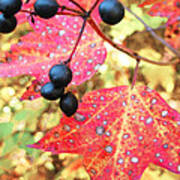 Berries And Leaves Poster