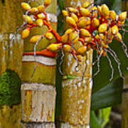 Berries On Bamboo Hawaii Poster