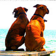 Best Friends Dog Photograph Fine Art Print Poster