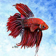 Betta-big Red Poster