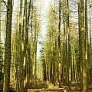 Betweenthe Trees Poster