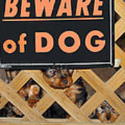 Beware Of Dog Poster by John Dauer
