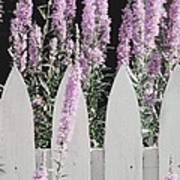 Beyond A Garden's Picket Fence Poster