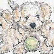 Bichon Frise Puppies Poster