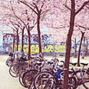 Bicycles Under The Blooming Trees. Pink Spring In Amsterdam  Poster