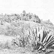 Bidwell Park Cactus Poster