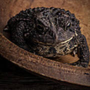 Big Black Toad Poster