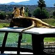 Big Cat Just Resting Poster