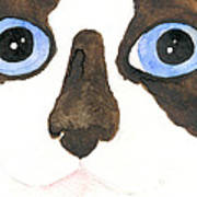 Big Eyed Cat Poster