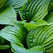 Tropical Green Leaves Poster