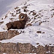 Big Horn Ram   #7036 Poster