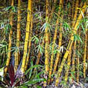 Big Island Bamboo Poster