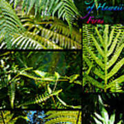Big Island Of Hawaii Ferns 2 Poster by Colleen Cannon