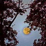 Big Old Autumn Moon Poster