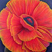 Big Poppy Poster by Ruth Addinall