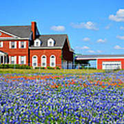 Big Red House On Bluebonnet Hill Poster