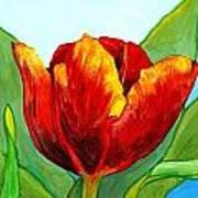 Big Red Tulip Poster