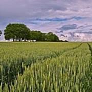 Big Sky Montana Wheat Field  Poster